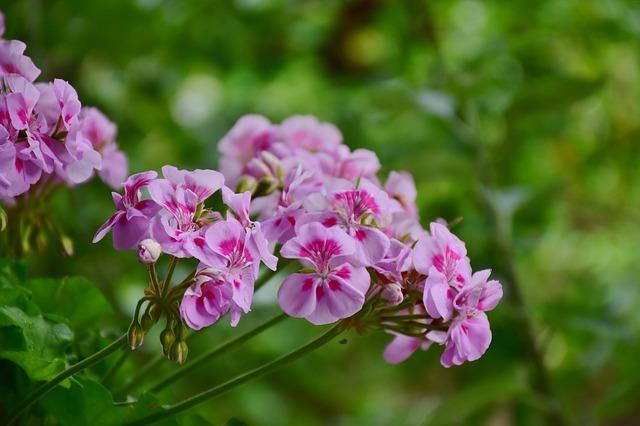 3 planter som du kan lave dine egne stiklinger af