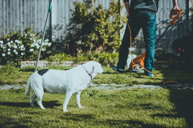Sådan holder du din hund i haven