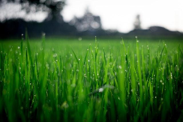 Hvornår skal du så græs?