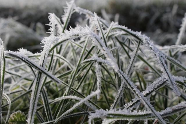 Har du styr på havesituationen inden vinter?
