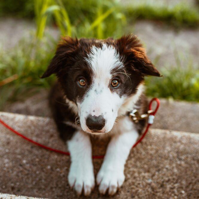 Er din have også en god have for din hund?