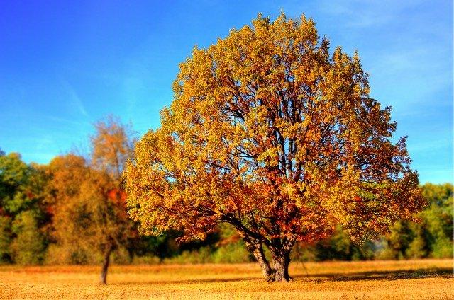 Få det bedste ud af efteråret